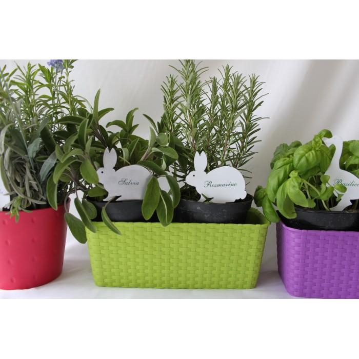 Targhetta per piante aromatiche: CONIGLIO