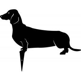 JOHNNY cane bassotto colorato